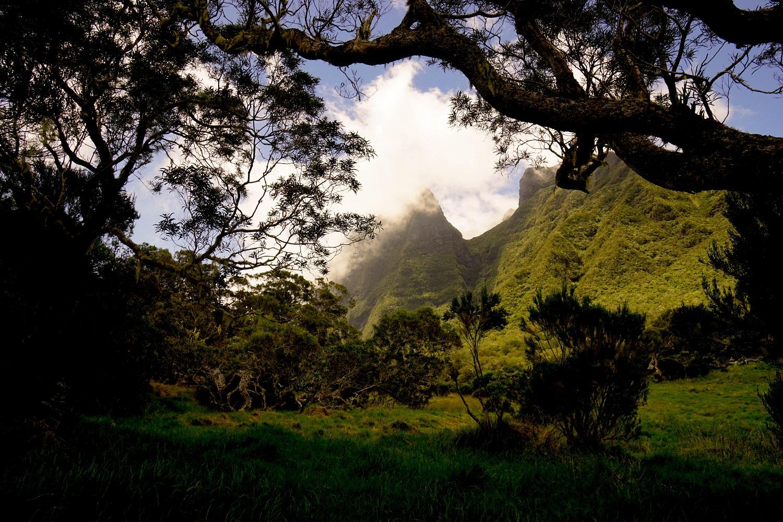 La Réunion Flora